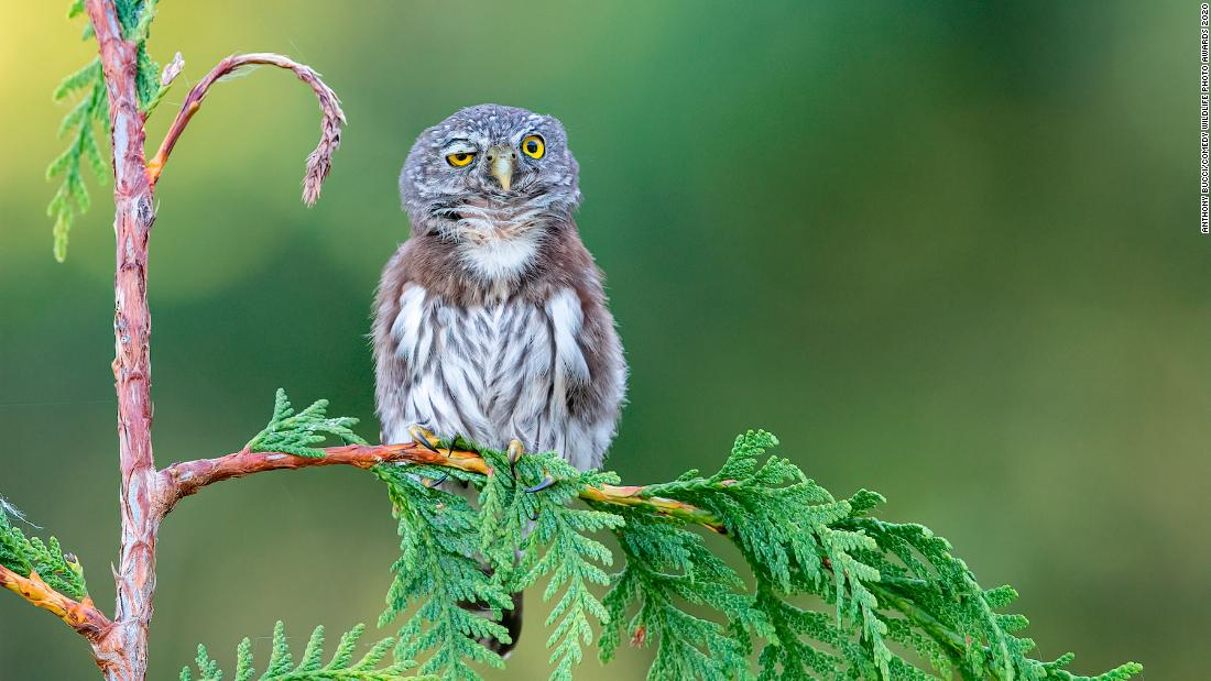 The Comedy Wildlife Photography Awards 2020 entry is the laughter we all need today