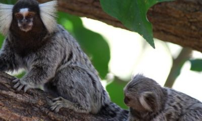 MMA cria programa para resgatar animais silvestres